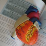 【筋トレのメリット】トレーニングが血圧に及ぼす影響について
